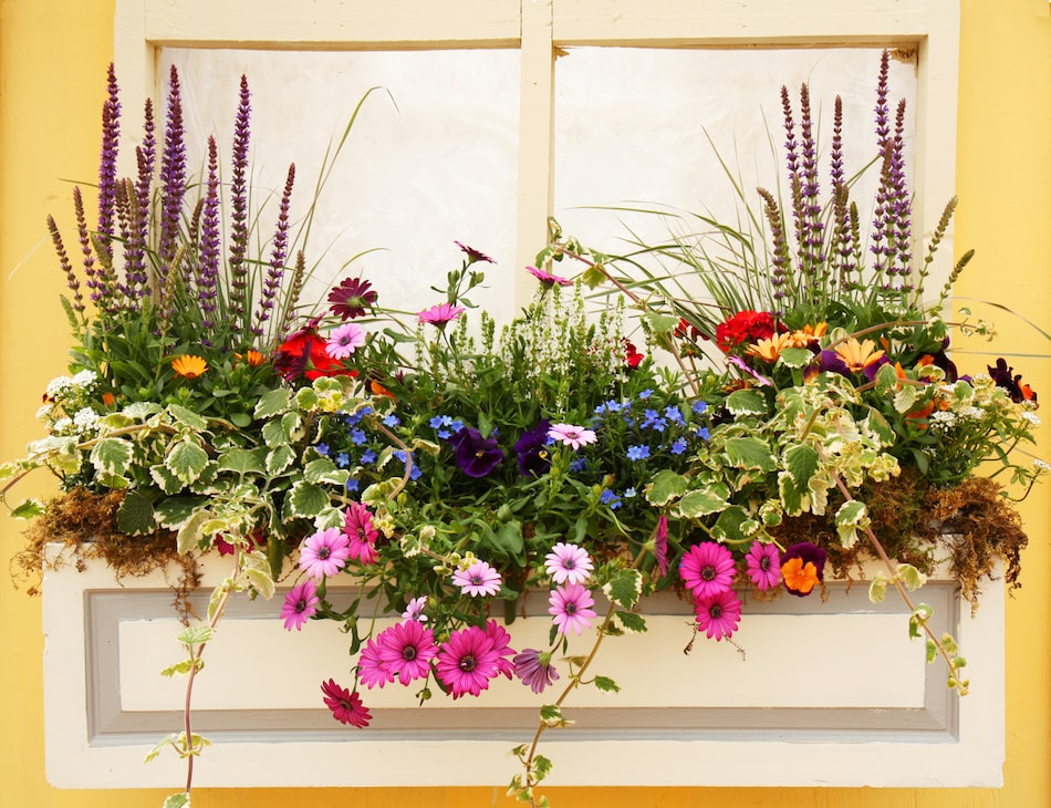 Update Your Window Box
